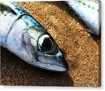 Fish Canvas Print by Daniel Kulinski