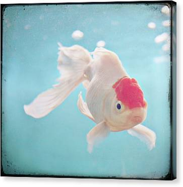 Fish In The Sea Canvas Print by photo by Anna Theodora
