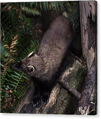 Fisher - 0005 Canvas Print by S and S Photo