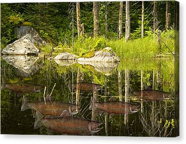 Fisherman's Dream Trout Pond Canvas Print by Randall Nyhof