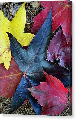 Five Fall Leaves Canvas Print by Sandi OReilly