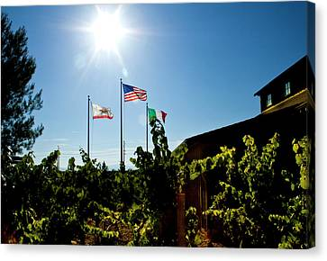 Flags At A Vineyard Canvas Print by Terry Thomas