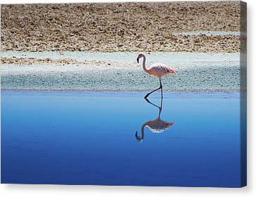 Flamingo Canvas Print by MaCnuel