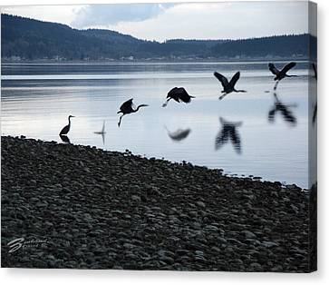 Flight Of The Blue Heron 2 Canvas Print by David Zinkand