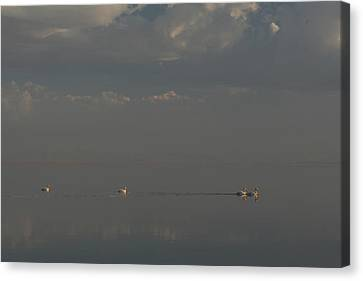 Floating Along Canvas Print by Laurie Search