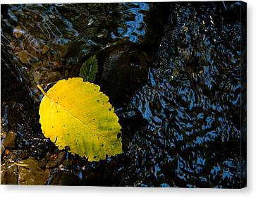Floating Down The River Canvas Print by Sheri Van Wert