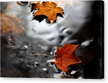 Floating Maple Leaves Canvas Print by LeeAnn McLaneGoetz McLaneGoetzStudioLLCcom