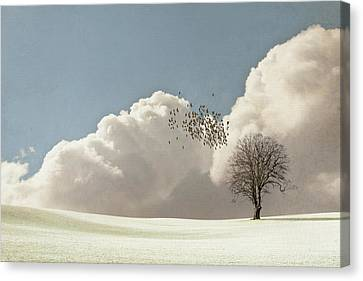 Flock Of Starlings Flying Canvas Print by Image by J. Parsons
