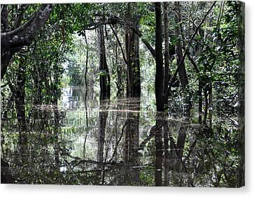 Flooded Amazon Rainforest Canvas Print by Oliver J Davis Photography