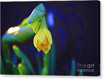 Florescence Canvas Print by Miso Jovicic