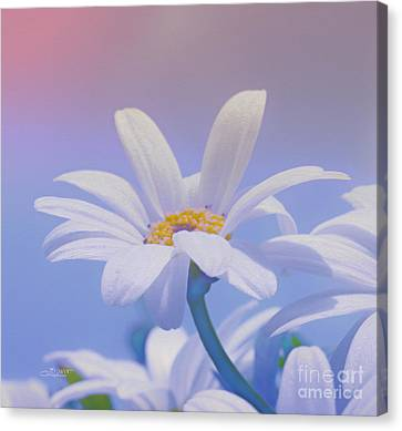 Flower For You Canvas Print by Jutta Maria Pusl