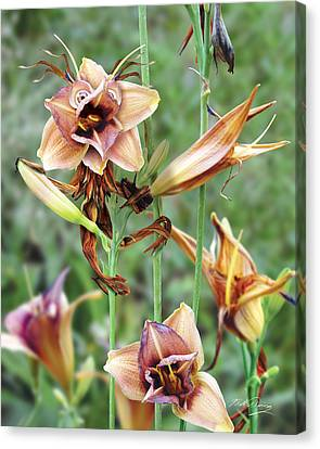 Flower Sprite Canvas Print by Bill Fleming