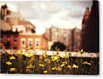 Flowers - High Line Park - New York City Canvas Print by Vivienne Gucwa