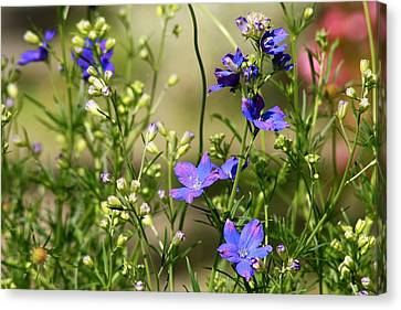 Flowers Of Summer Canvas Print by Robin Regan