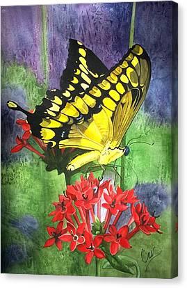 Flutter-by Canvas Print by Karen Casciani