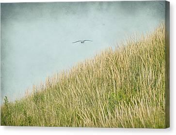 Fly Away Canvas Print by Cathy Kovarik