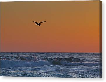 Fly By Canvas Print by Charles Warren