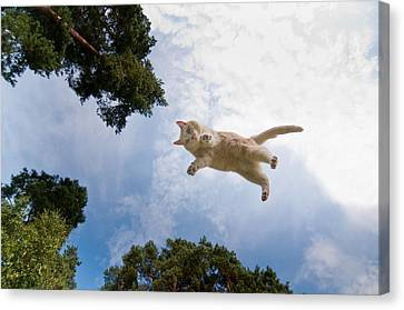 Flying Cat Canvas Print by Micael  Carlsson