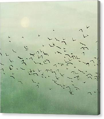 Flying Flock Of Birds Canvas Print by Laura Ruth