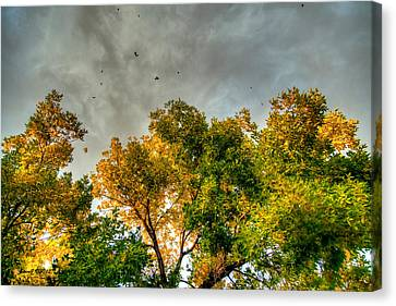 Flying Leaves Canvas Print by Stephen  Johnson