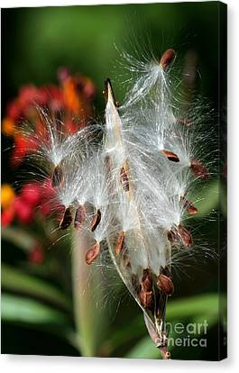 Flying Milkweed Silk Canvas Print by Sabrina L Ryan
