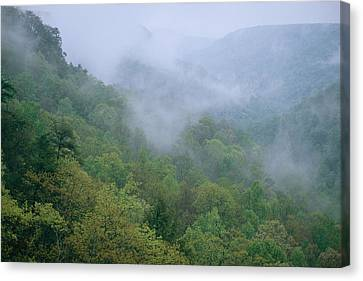 Fog Drifts Across A Cove In Tennessee Canvas Print by Stephen Alvarez