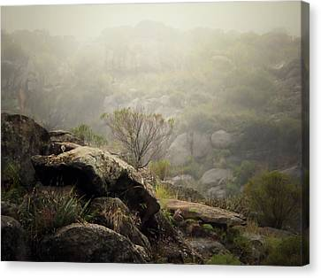 Foggy Canvas Print by Pablo Chamorro Photography