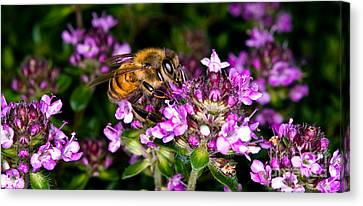 Follow The Bee Canvas Print by Terry Elniski