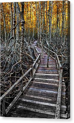 Footpath In Mangrove Forest Canvas Print by Adrian Evans