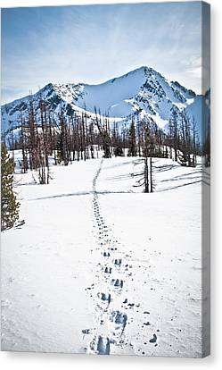 Footprints Leads To Frosty Mountain Canvas Print by Christopher Kimmel