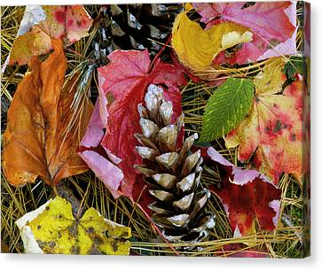 Forest Floor Portrait Canvas Print by Rich Franco