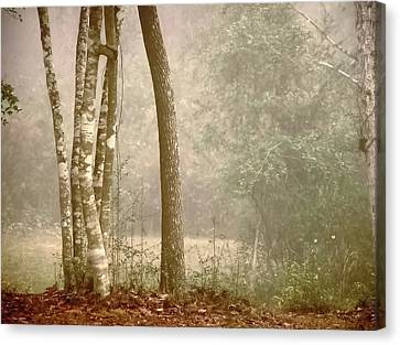 Forest In Fog Canvas Print by Robert Brown