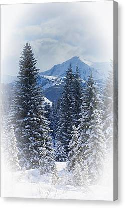 Forest In The Winter Canvas Print by Carson Ganci