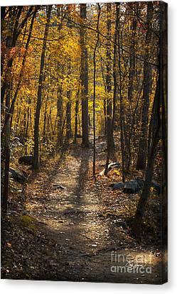 Forrest Of Gold Canvas Print by Cris Hayes