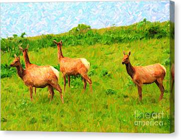 Four Elks Canvas Print by Wingsdomain Art and Photography
