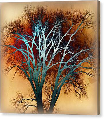 Freaky Tree 1 Canvas Print by Marty Koch