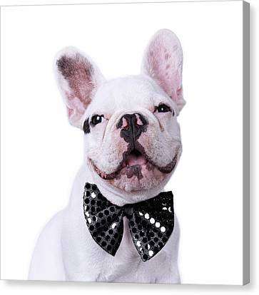 French Bulldog And Bow Tie Canvas Print by Maika 777