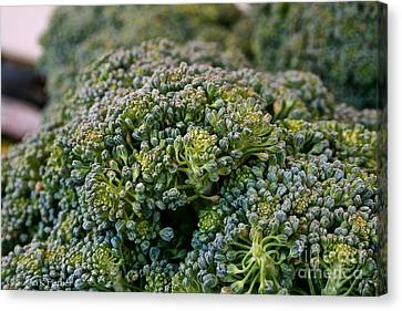 Fresh Broccoli Canvas Print by Susan Herber