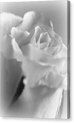 Friendship Rose In Black And White Canvas Print by Mark J Seefeldt