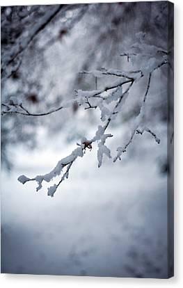 Frozen Path Canvas Print by Mike Reid