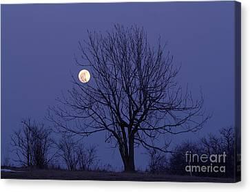 Full Moon Canvas Print by Michal Boubin