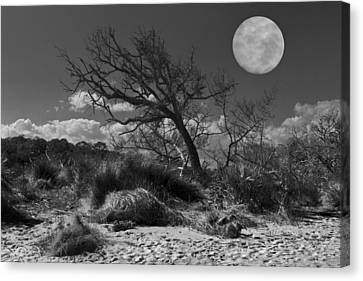 Full Moon Over Jekyll Canvas Print by Debra and Dave Vanderlaan