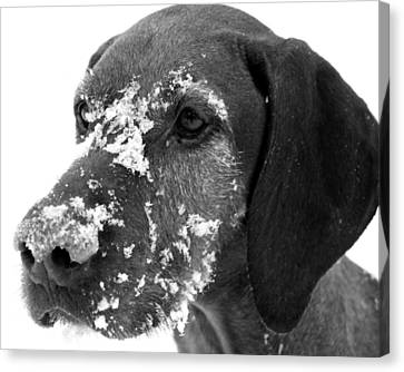 Fun In The Snow Canvas Print by Gray  Artus