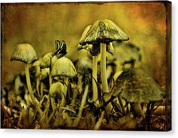 Fungus World Canvas Print by Chris Lord