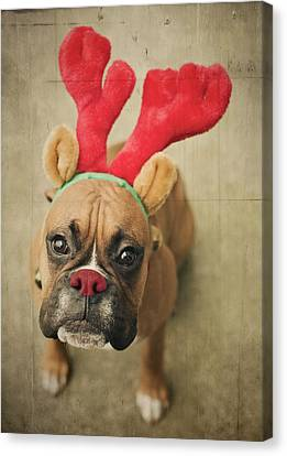 Funny Boxer Puppy Canvas Print by Jody Trappe Photography