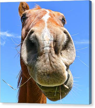 Funny Brown Horse Face Canvas Print by Jennie Marie Schell