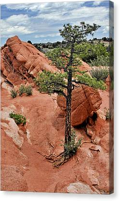 Garden Of The Gods  - The Name Says It All Canvas Print by Christine Till