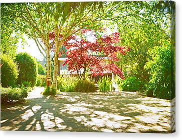 Garden Shade Canvas Print by Tom Gowanlock