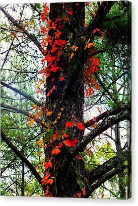 Garland Of Autumn Canvas Print by Karen Wiles
