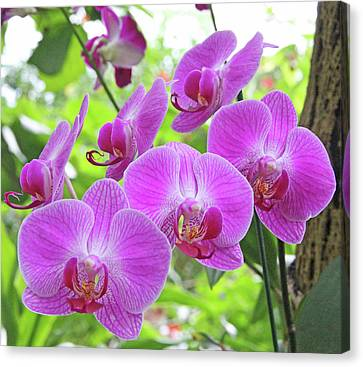 Gathering Of Orchids Canvas Print by Becky Lodes